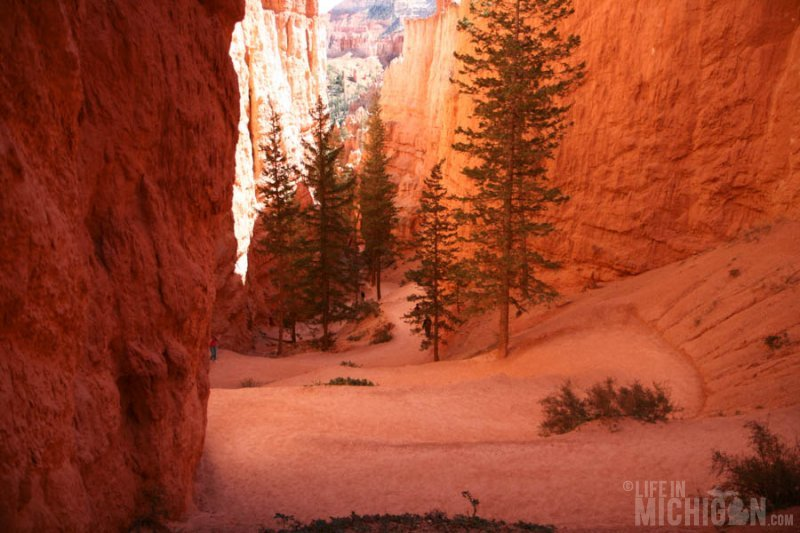 Looking down the Navajo trail