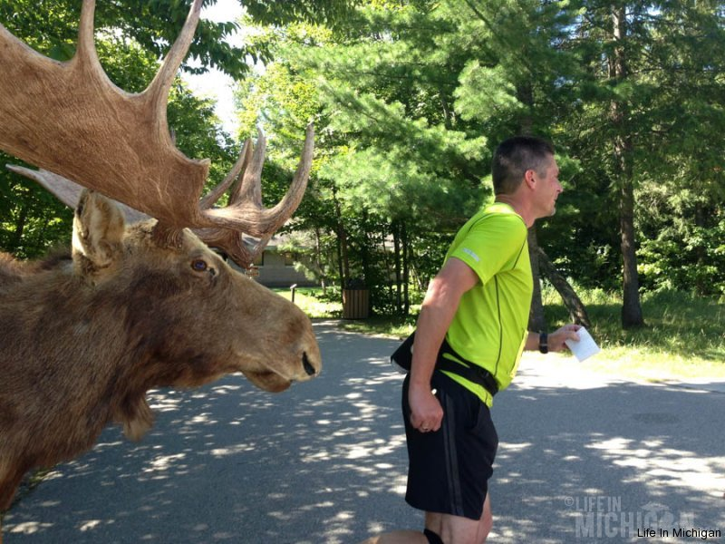 A moose chases after Jeff