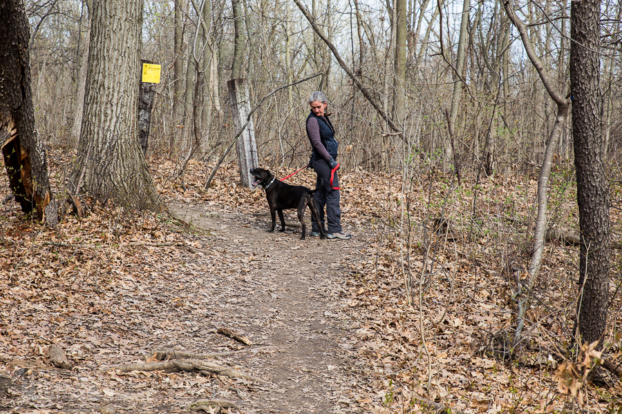 Ann Arbor Trails - Leslie -2015-11