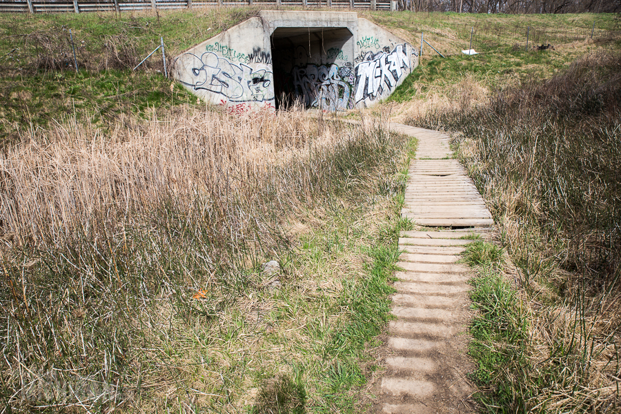 Ann Arbor Trails - Leslie -2015-28