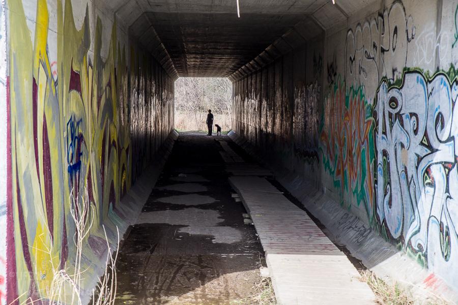 Ann Arbor Trails - Leslie -2015-29