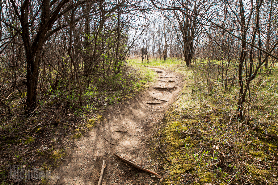 Ann Arbor Trails - Leslie -2015-31