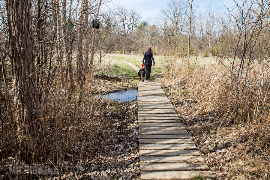 Ann Arbor Trails - Leslie -2015-33