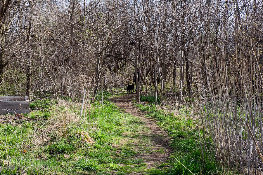 Ann Arbor Trails - Leslie -2015-4