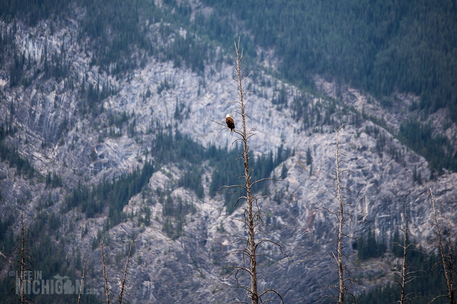 Banff - Day 3-25