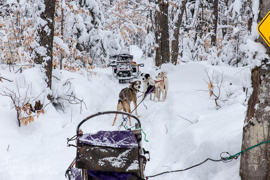 Dog sledding Munising - U.P. Winter - 2014 -1