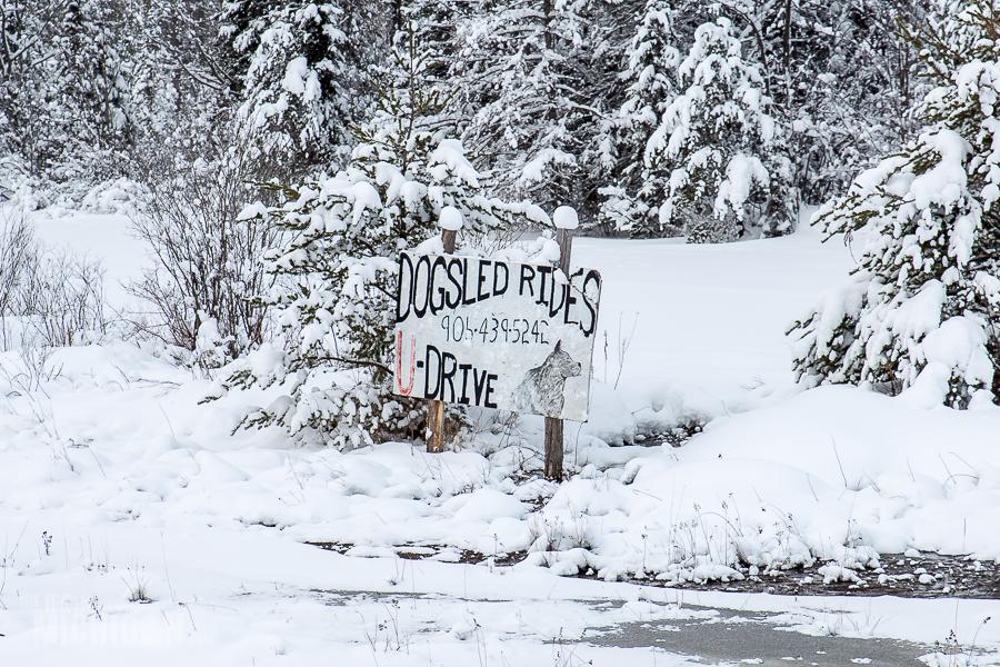 Dog sledding Munising - U.P. Winter - 2014 -13
