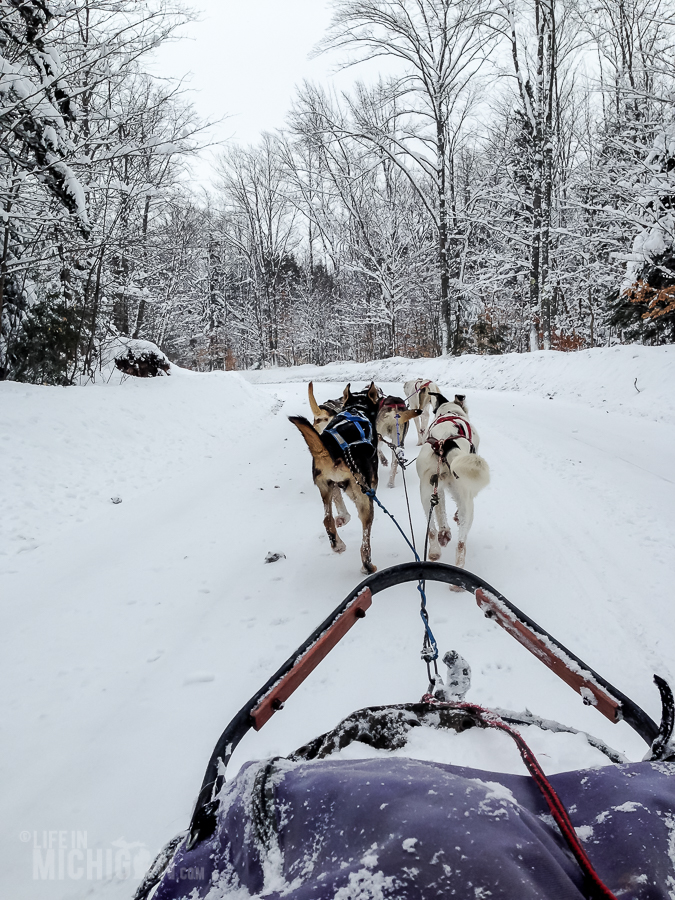 Dog sledding Munising - U.P. Winter - 2014 -21