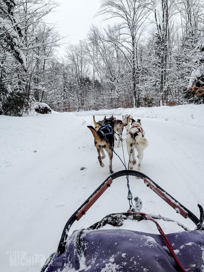 Dog sledding Munising - U.P. Winter - 2014 -21