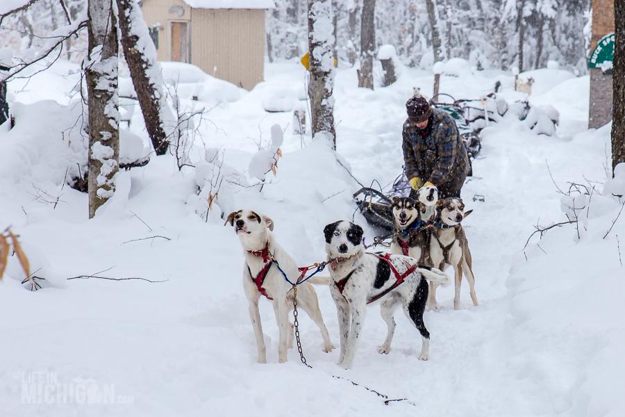 Dogsledding Munising - U.P. Winter - 2014 -3