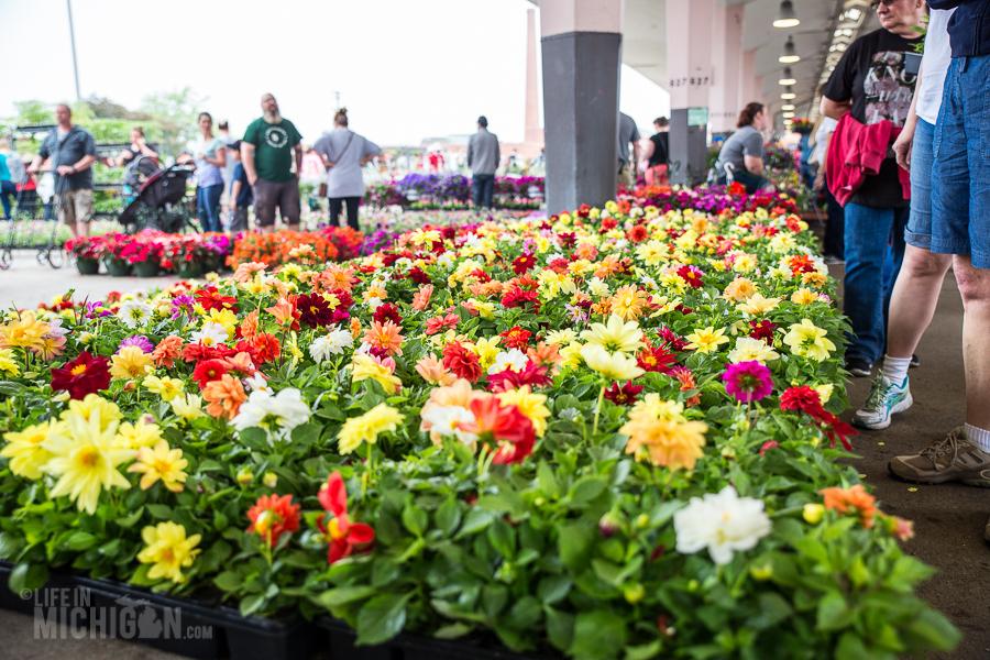 Detroit's Eastern Market Flower Day - 2015-9