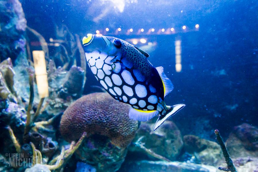 Explore Detroit - Belle Isle Aquarium - 2015-4