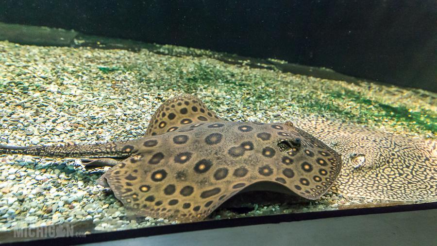 Explore Detroit - Belle Isle Aquarium - 2015-8