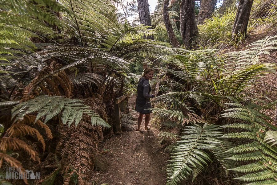 Forgotten-World-Highway-New-Zealand-9