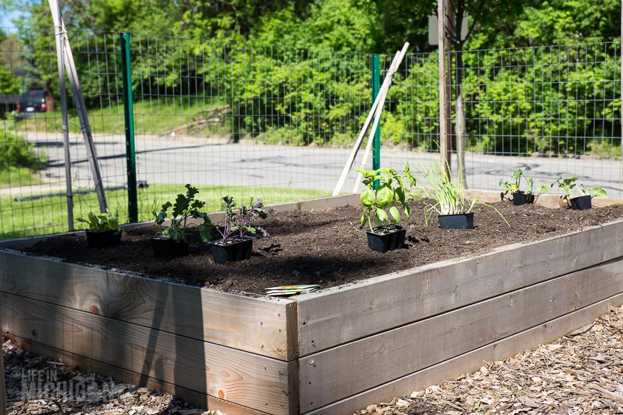 New Plants - Spring Gardening
