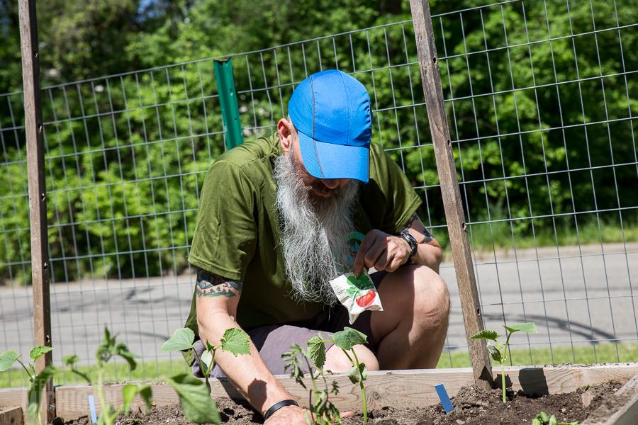 Chuck planting radishes - Spring Gardening