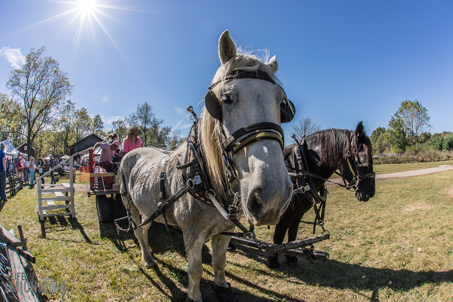 Pioneer Day at the Waterloo Farm Museum - 2017-14