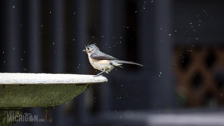 Spring Animals 2015-12 Bird Bath