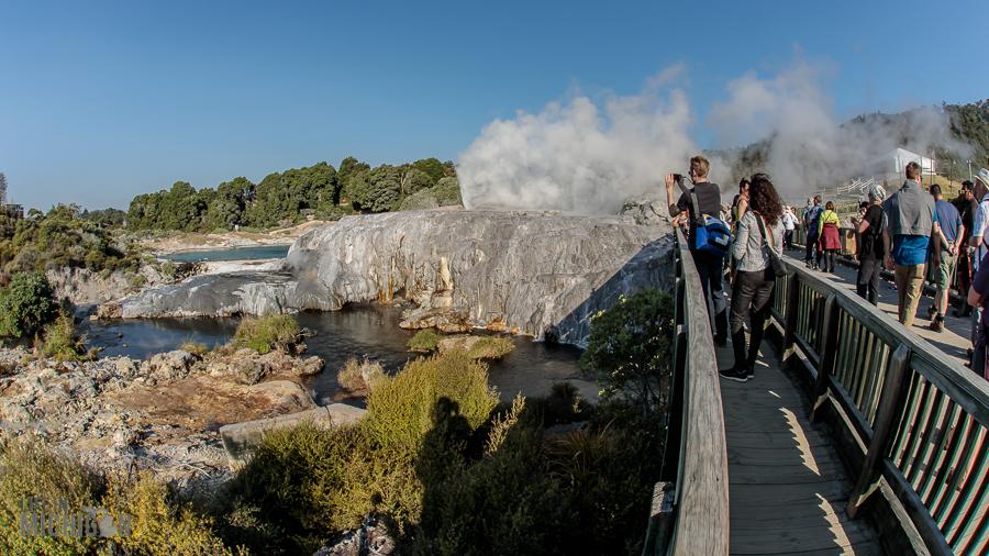 geysers - Te Puia in Rotorua