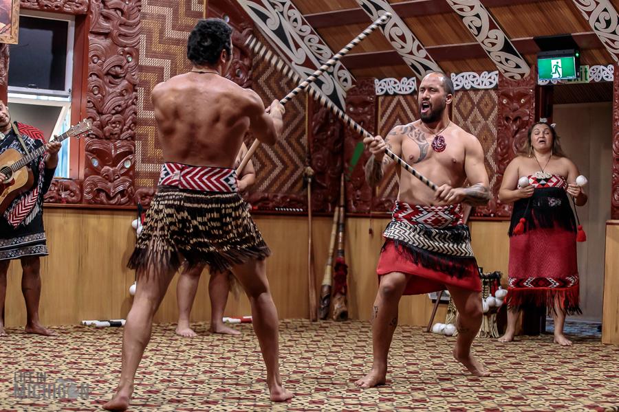 warrior - Te Puia in Rotorua