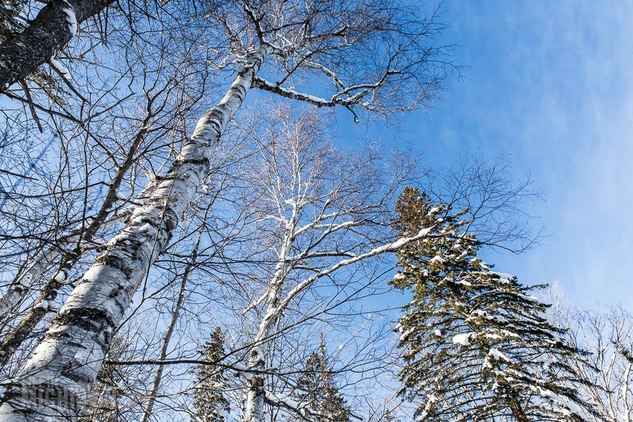 Yellow Dog River Snowshoe - U.P. Winter - 2014 - 16