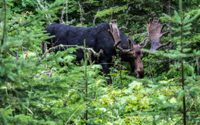A Visit to Isle Royale