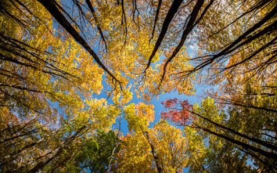 Northern Michigan Fall Color Tour Itinerary