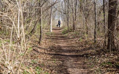 Ann Arbor Trail Series – Leslie Park Trail
