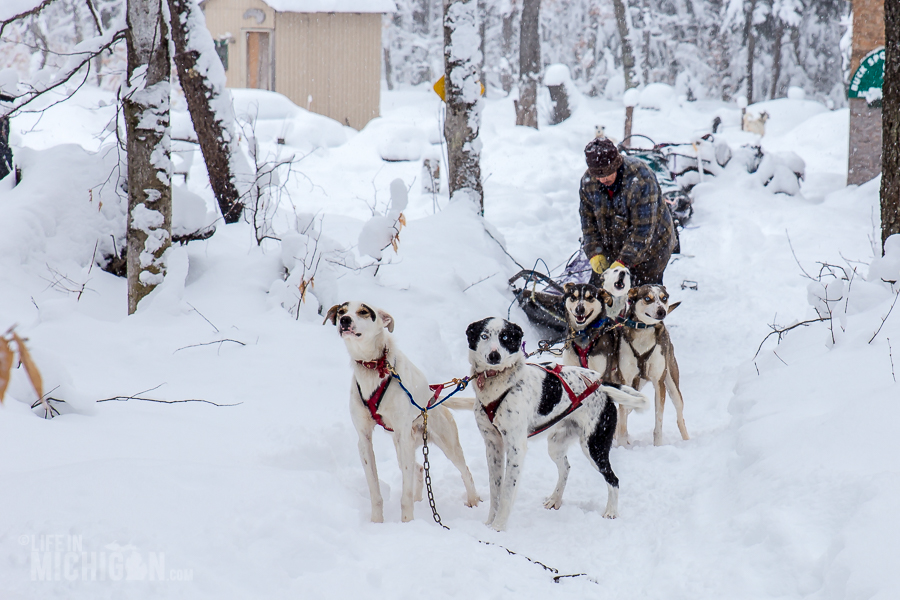 Dog sledding in Michigan's Upper Peninsula